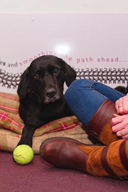 Darcy Office Dog